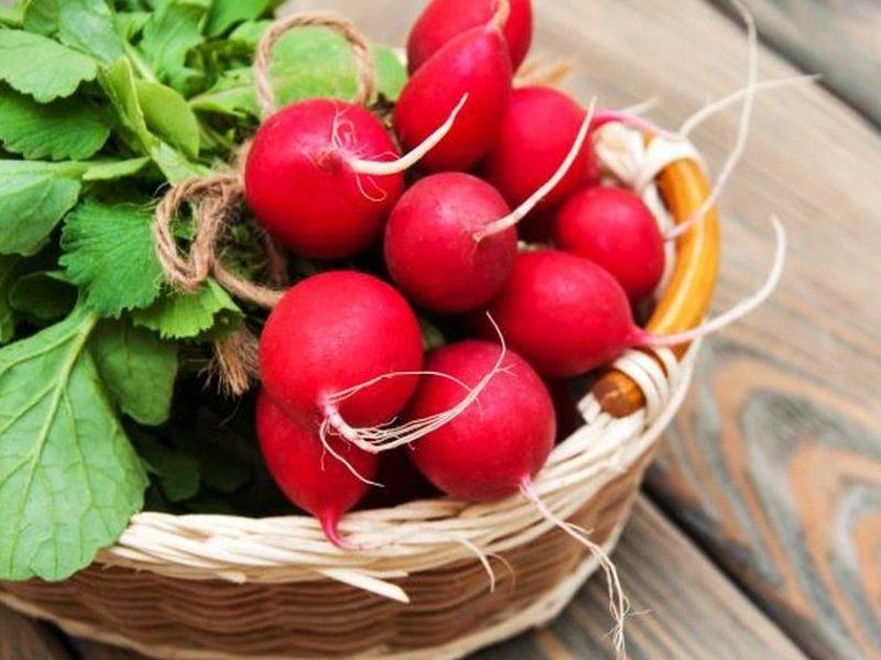 فوائد الفجل تعرف على أفضل 7 فوائد لتناول الفجل للحفاظ على الصحة